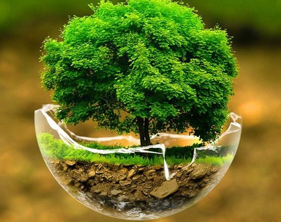 ISO 14001 | Environmental
